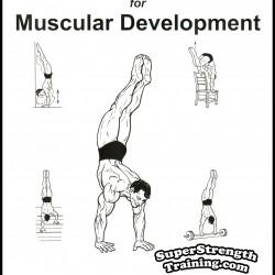 Bill Hinbern – Hand-Balancing for Muscular Development